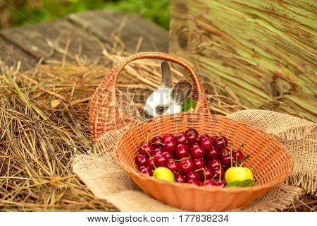Cute Rabbit Sitting In Wicker Basket With Cherry