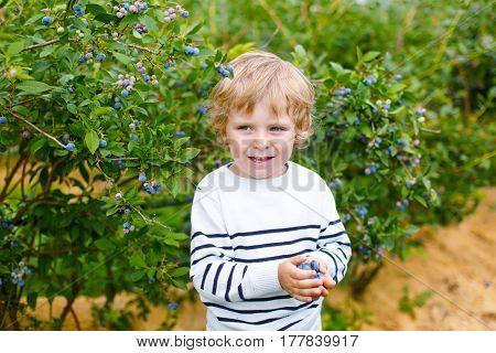 Cute little kid boy picking fresh berries on blueberry field. Child pick blue berry on organic farm. Little toddler boy play outdoors in fruit orchard. Preschooler gardening. Family having summer fun