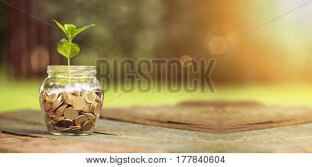 Website banner of golden coins in a glass jar with plant