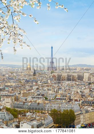 skyline of Paris city roofs with Eiffel Tower from above with spring tree, France
