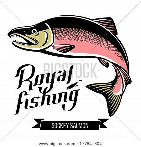 Sockey Salmon fish. Color outline vector illustration
