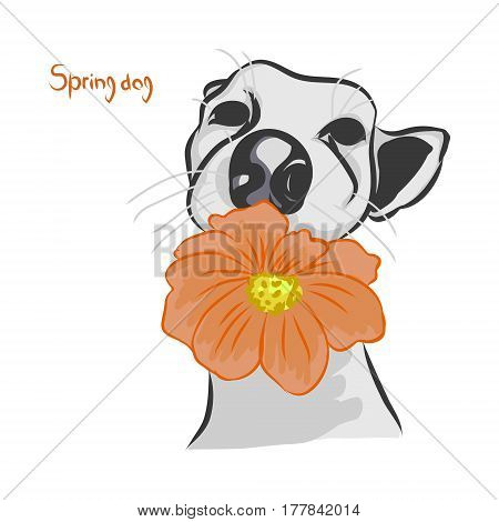 The dog with the orange flower on white background vector illustration