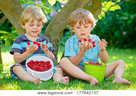 Two little friends, kid boys having fun on raspberry farm in summer. Children eating healthy organic food, fresh berries. Happy twins. Cute gardeners, toddlers, helping with harvest. Snack for kids