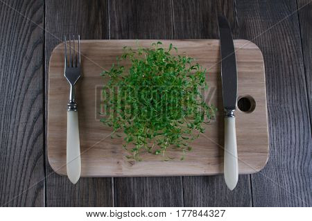Fresh cress sprouting ready for salad. Healthy vegetarian food.Fresh herbs.