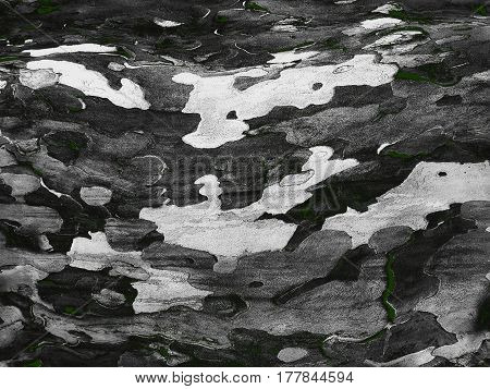 Gray Shades Tree Bark Camouflage Natural Texture