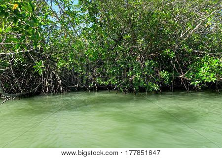 Mangroves in the sea at the Khao Sam roi Yot national park Thailand