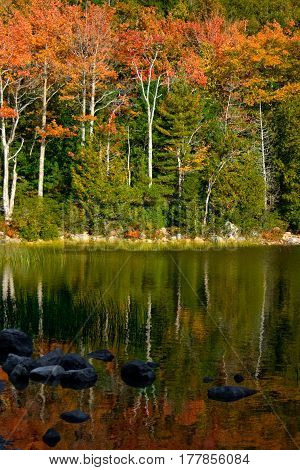 Autumn Foliage Reflected In Pond At Acadia National Park