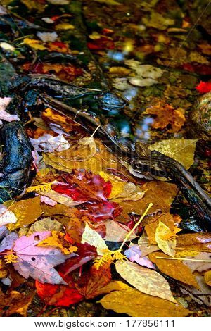 Colorful Autumn Leaves In Water