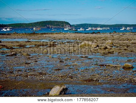 Boats In Bar Harbor Maine At Low Tide