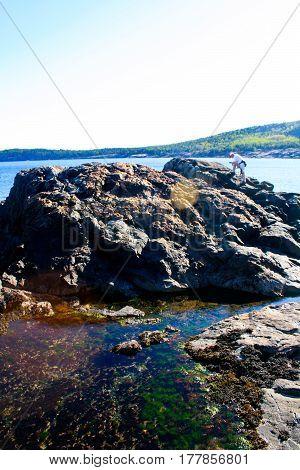 Tidal Pools In Acadia National Park