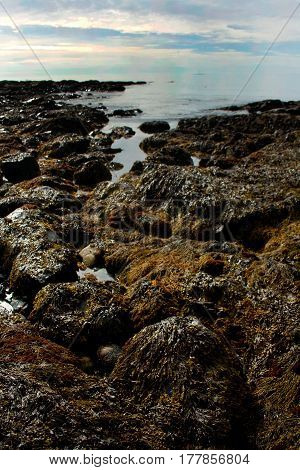 View Of Rocky Shoreline And Tide Pools In Maine
