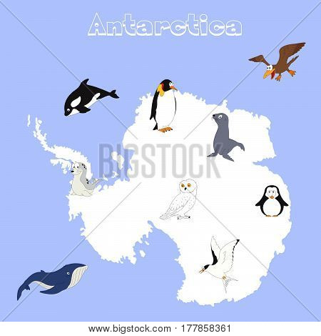 Fauna Of Antarctica. Set Of Cartoon Polar Animals For Babies And Kids