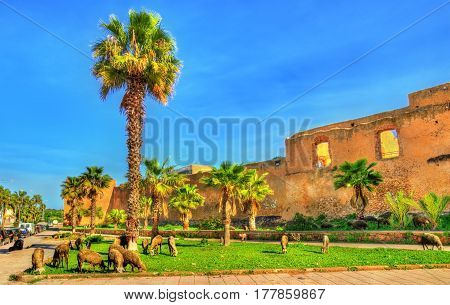 Herd of sheep at the city walls of Azemmour in Morocco, North Africa