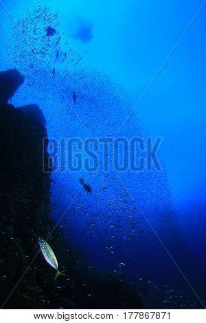 Underwater ocean scene with sardines shoal