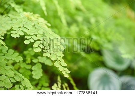 closeup of beautiful fresh green leaves in spring season use for background or backdrop in natural environment and health concepts