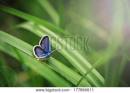 Beautiful tropical butterfly outdoors plants green background
