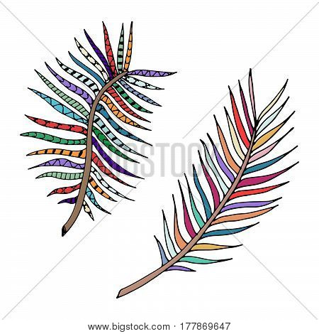Hand drawn isolated fern. Tropical vector elements.