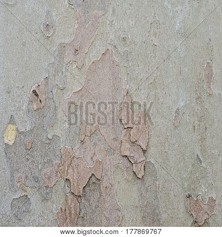 Scaled heterogeneous spotted background brownish-green rough bark
