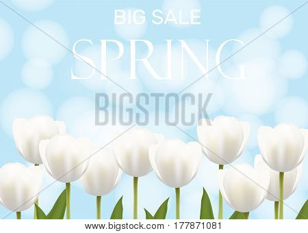 Spring sale illustration with white vector flowers tulips. Light blue background bokeh effect. Banner poster flyer poster invitation card.