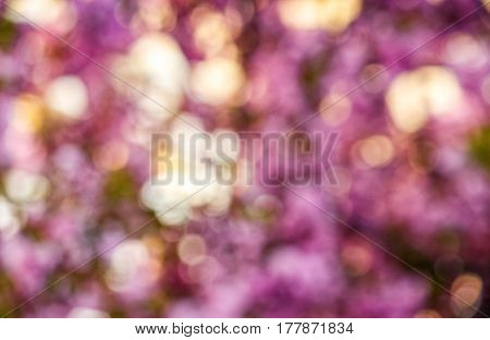 Beautiful springtime blur background. Abstract sakura flowers blossom in garden