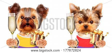 Funny dogs holding glass of champagne and gift. Party and celebration concept