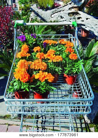 Buy flowers. Selection of flowers to plant in the garden.