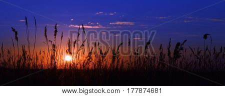 The setting sun and the grass. Low on the horizon sun. Shine through the dark grass. Dark blue sky and light clouds.