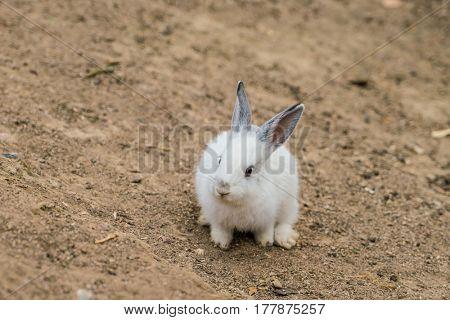 Rabbit for easter holiday ( Filtered image processed vintage effect. )