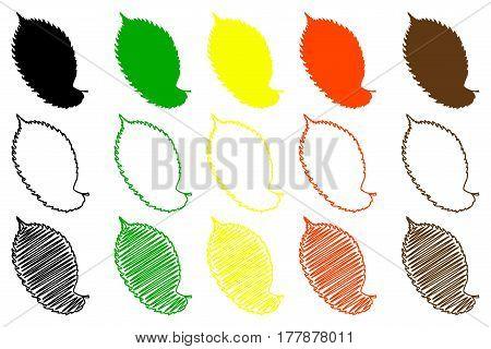 elm leaf - color set , elm leaf