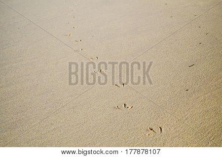 Seagull steps on the sand of a tropical beach