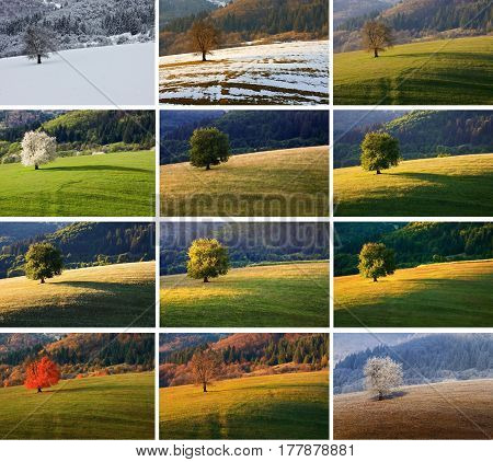 Twelve month single spring cherry tree on meadow. One year in life of tree. January, february, march, april, may, june, july, august, september, october, november, december landscape.