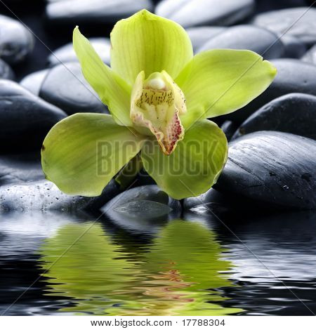 Macro of Orchid on a marble surface
