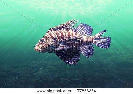 close up on Pterois lionfish in aquarium