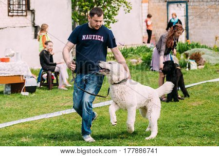 Gomel, Belarus - April 30, 2016: Central Asian Shepherd Dog Walking On Green Grass With Owner. Alabai - An Ancient Breed From The Regions Of Central Asia