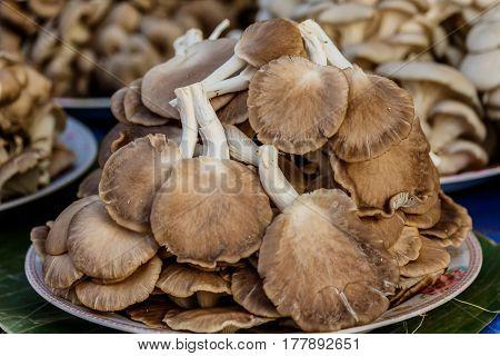 Angel mushroom or oyster mushroom on dish forsale.