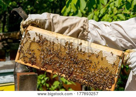 Beekeeper Working On His Beehives In The Garden