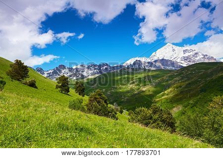 Incredible landscape with high rocky mountains with snowy tops and green lawns with yellow flowers. Upper Svaneti Georgia Europe.