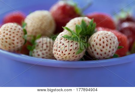 ripe varietal white and red strawberry lying in a lavender Cup