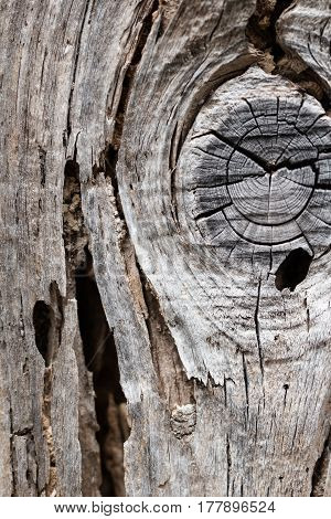 Old rustic dry decay wood board full of crack and wormholes made by woodworm and with wood knot pattern as a vintage background