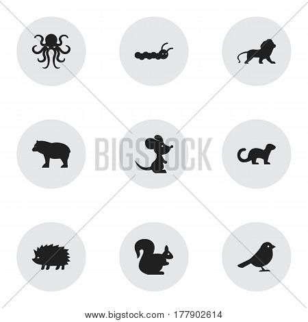 Set Of 9 Editable Animal Icons. Includes Symbols Such As Wildcat, Wild Rodent, Panda. Can Be Used For Web, Mobile, UI And Infographic Design.