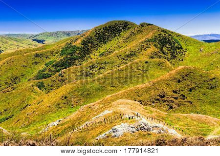 green hills farmland. Location New Zealand, Wellington