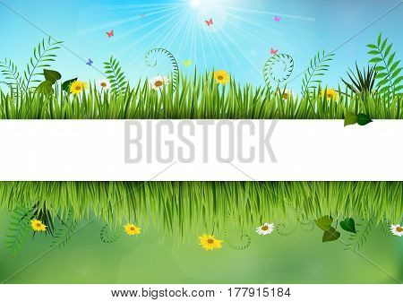 Vector illustration of Fresh spring and daisy borders