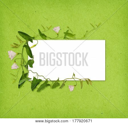 Bindweed flower and leaves in a frame on green paper background
