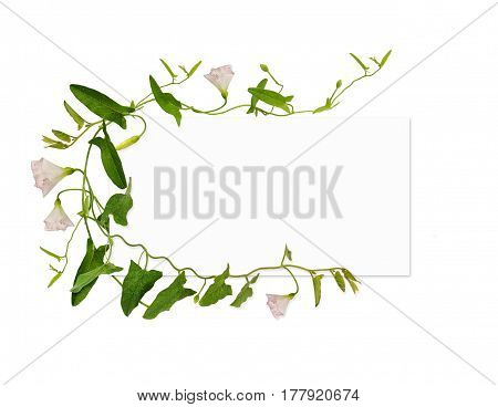 Bindweed flower and leaves and a card isolated on white background