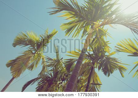 Palm trees against blue sky Palm trees at tropical coast vintage toned summer tree retro