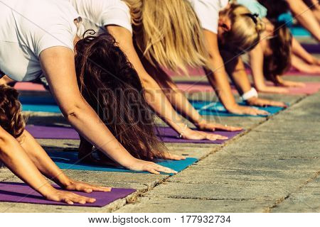 Yoga Day- Downward Dog Pose