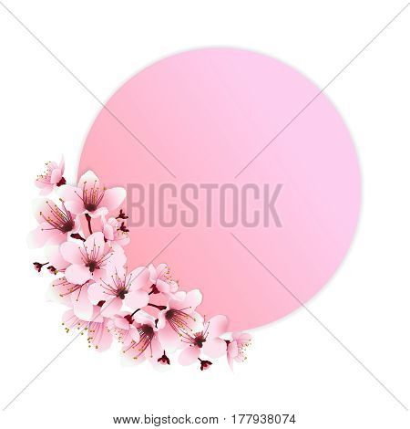 Pink circle for copy space decorated with pink cherry blossom flower. Image of springtime. Vector illustration