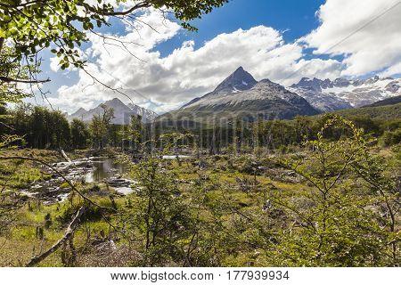 Landscape tierra del fuego national park patagonia