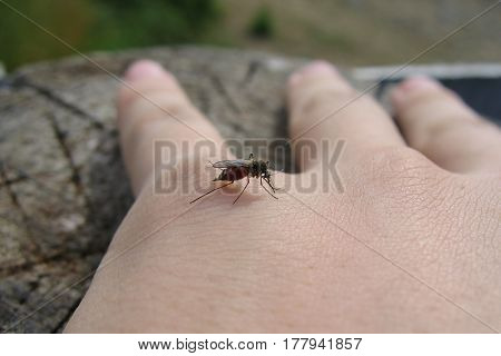 mosquito who drinks the blood of the man's hand close-up