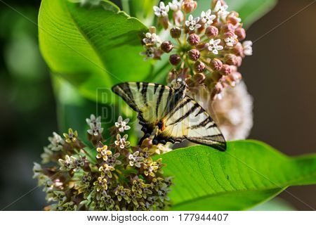 Butterfly on spring flowers